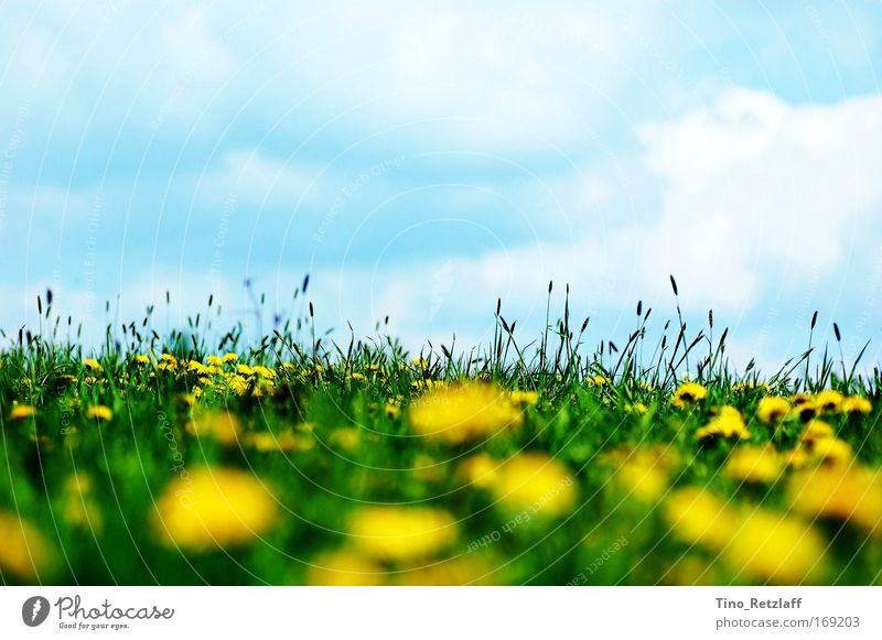 Nature Sky Plant Clouds Meadow Grass Spring Landscape Environment Hill Fragrance Beautiful weather Foliage plant Wild plant