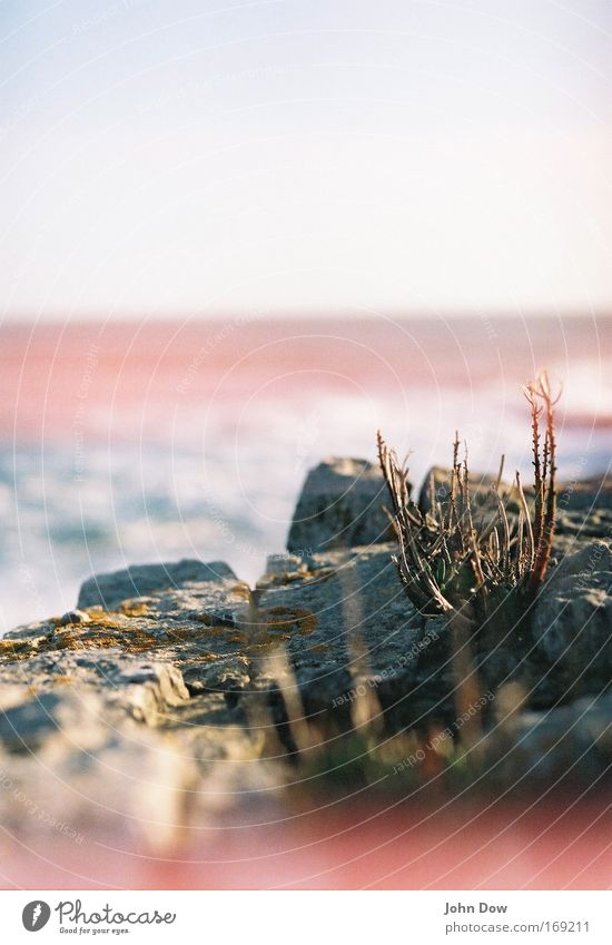 Water Ocean Plant Loneliness Stone Air Coast Wind Horizon Rock Growth Bushes Simple Uniqueness Infinity Stalk