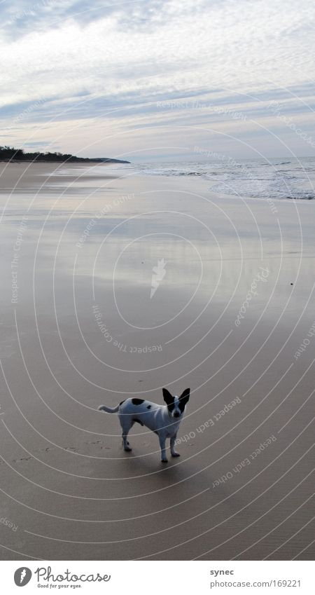 Nature Water Sky Joy Beach Vacation & Travel Calm Clouds Loneliness Animal Relaxation Playing Dog Sand Landscape Horizon