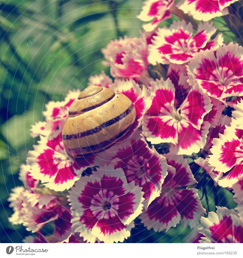 Nature Summer Plant Flower Animal Grass Blossom Pink Sit Beautiful weather Living or residing Stripe To enjoy Snail Vintage Crawl