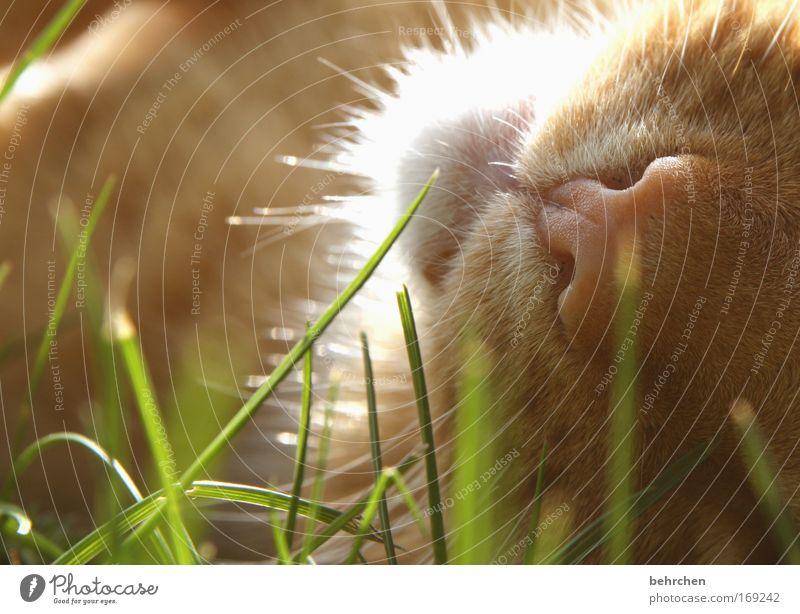 Cat Beautiful Grass Contentment To enjoy Nose Serene Well-being Pelt Blade of grass Pet Domestic cat Cuddly Snout Love of animals Caress