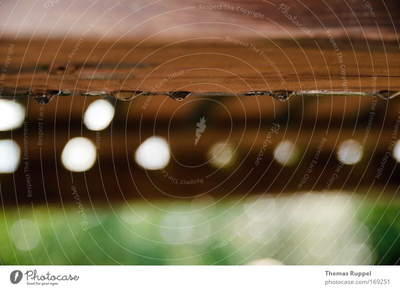 Nature White Green Wood Rain Brown Drops of water Circle Transparent