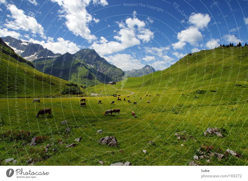 alpine pasture Colour photo Exterior shot Day Wide angle Environment Nature Landscape Plant Animal Earth Clouds Horizon Sun Sunlight Summer Beautiful weather