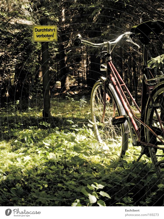 Nature Tree Vacation & Travel Plant Sun Forest Relaxation Environment Landscape Warmth Grass Spring Funny Bicycle Leisure and hobbies Exceptional