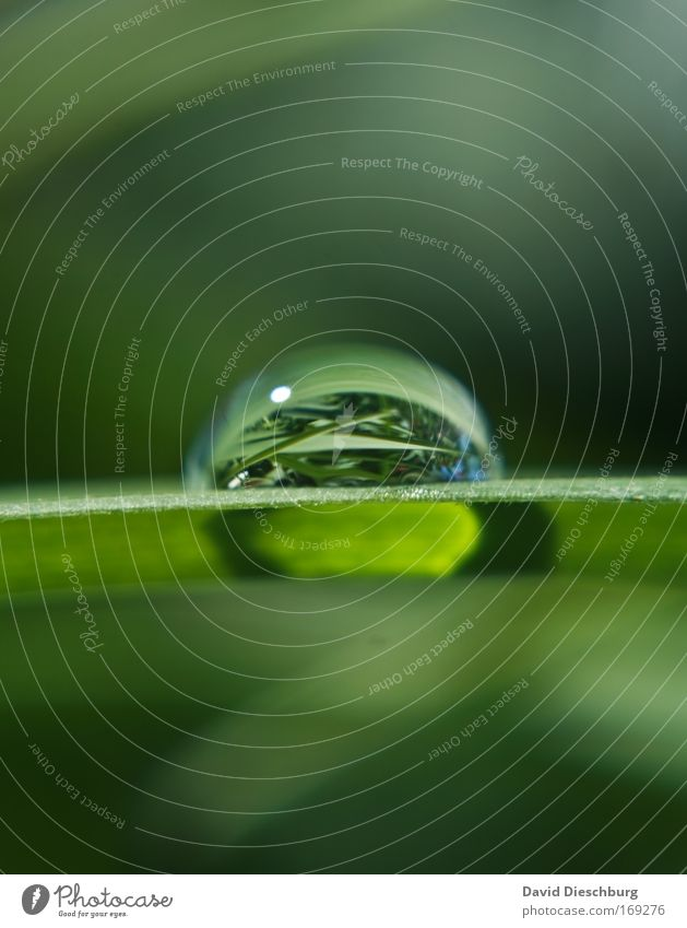 Nature Water Green Summer Plant Leaf Grass Spring Line Fresh Drops of water Individual Round Macro (Extreme close-up) Foliage plant