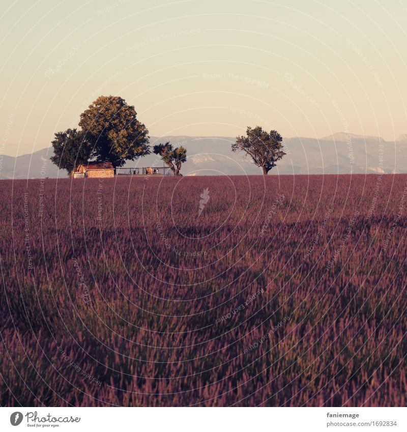 Nature Vacation & Travel Summer Beautiful Tree Landscape Mountain Warmth Field Idyll Blossoming Beautiful weather Romance Agriculture Violet France