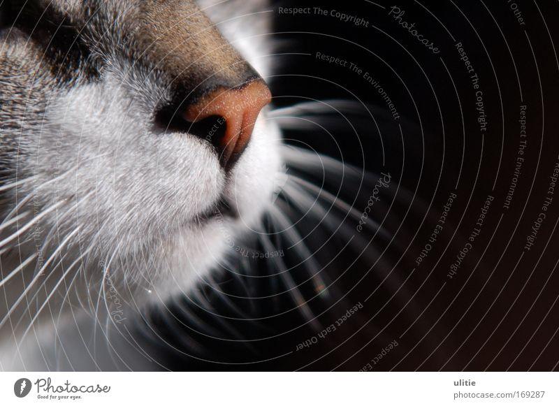 Red Nose Colour photo Interior shot Detail Morning Contrast Animal portrait Forward Pet Cat 1 Discover Glittering To enjoy Wait Esthetic Beautiful Uniqueness