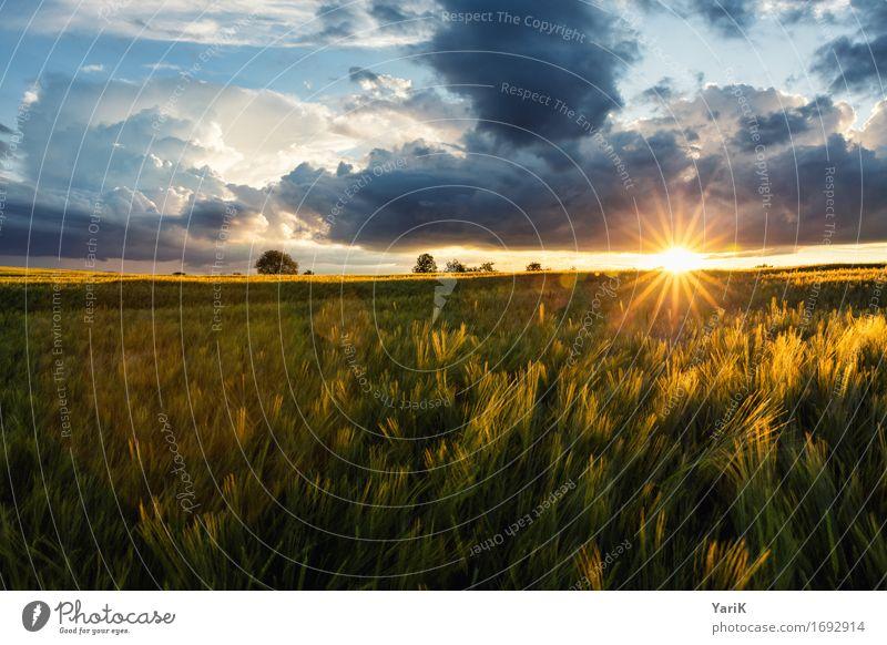 Sky Nature Blue Summer Sun Landscape Clouds Environment Warmth Meadow Orange Horizon Weather Field Gold Wind