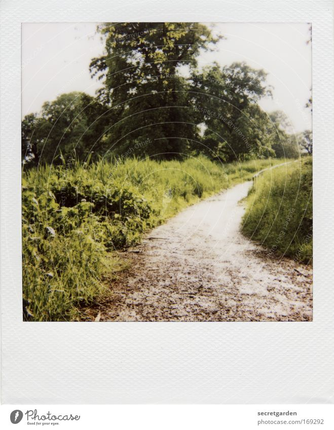 [HH09.3/4] The way to the witch house. Colour photo Subdued colour Exterior shot Polaroid Deserted Copy Space bottom Copy Space middle Morning Day Sunlight