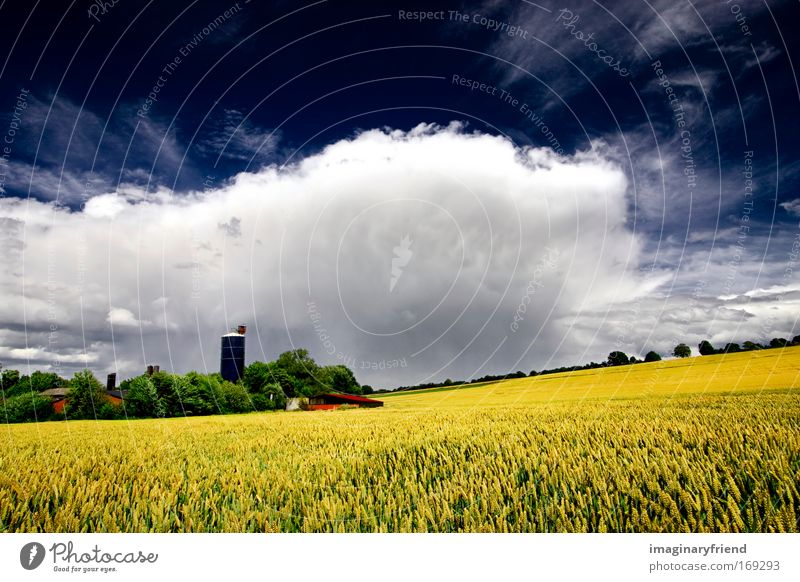 Nature Sky White Green Blue Plant Summer Clouds Yellow Spring Gray Landscape Field Wind Weather Gale