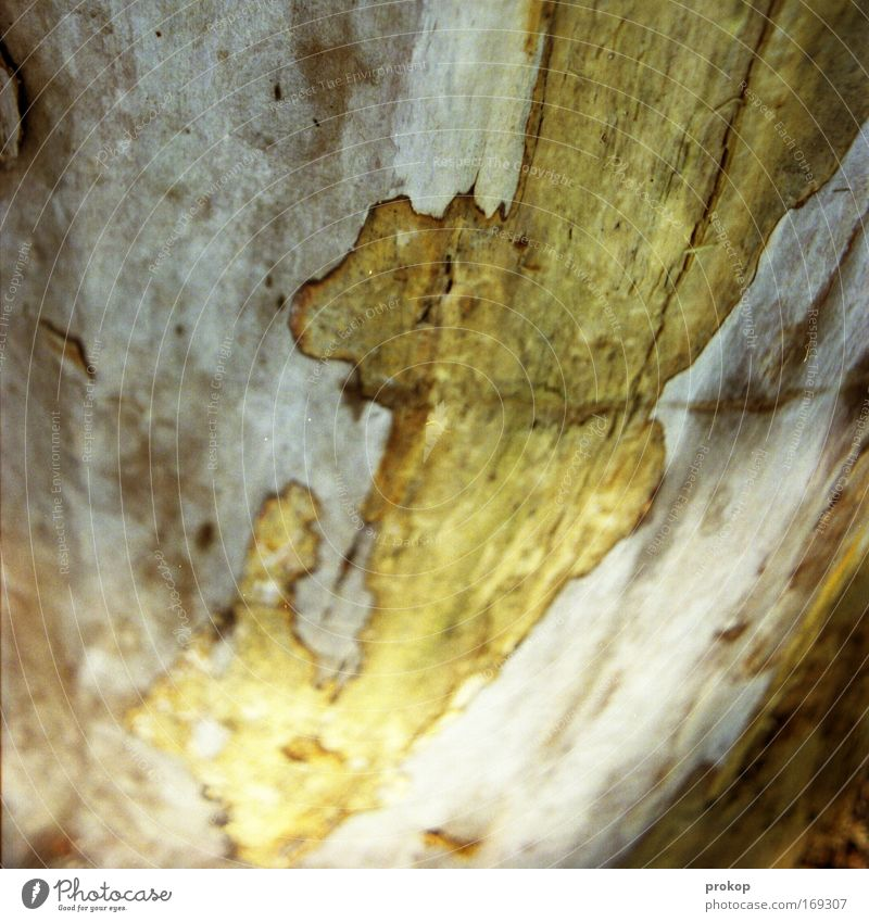 Nature Tree Plant Wood Discover Map Tree bark Wood grain Tree trunk