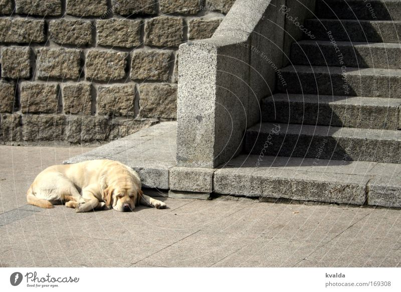 Summer Calm Animal Relaxation Gray Dog Stone Warmth Contentment Gold Stairs Places Hot Serene Boredom