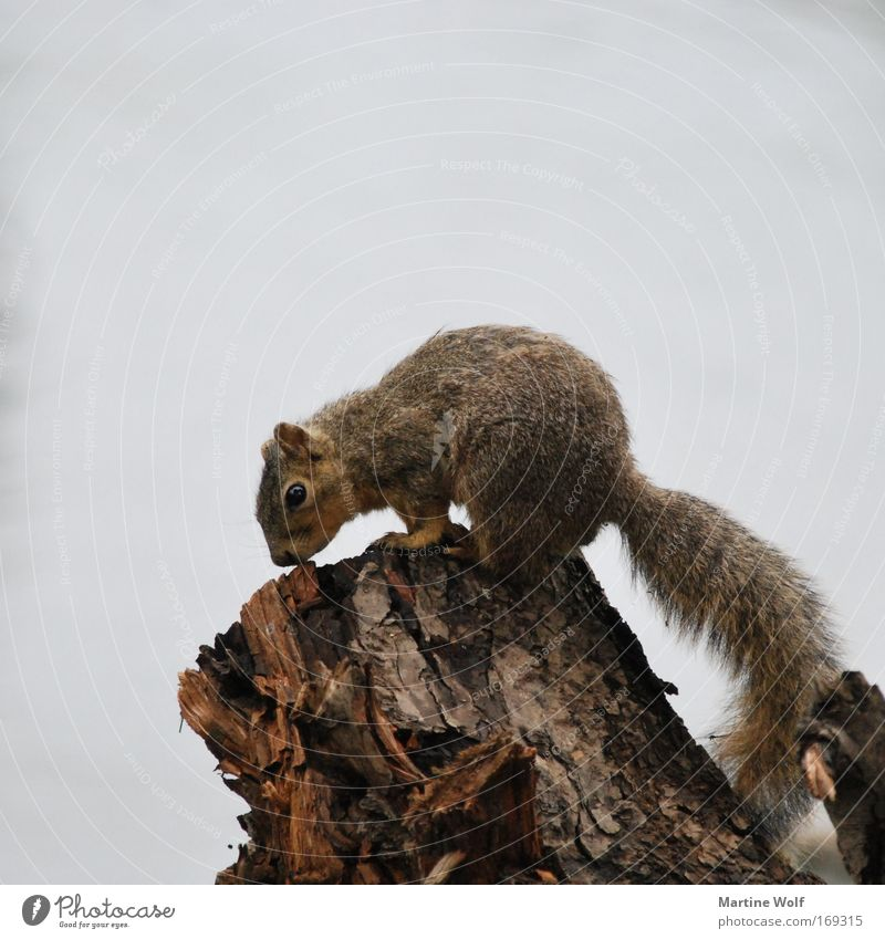 Nature Vacation & Travel Animal Gray Wood Brown Wild Wild animal Trip Cute Curiosity Bad weather Squirrel