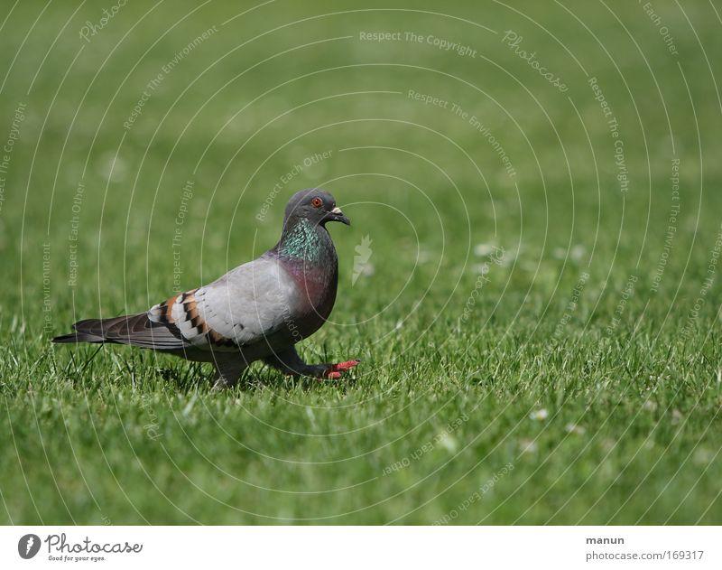 Blue Green Beautiful Summer Animal Colour Calm Environment Meadow Gray Grass Small Park Bird Contentment Going