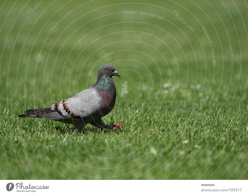 Blue Green Beautiful Summer Animal Colour Calm Environment Meadow Gray Grass Small Park Bird Contentment Going