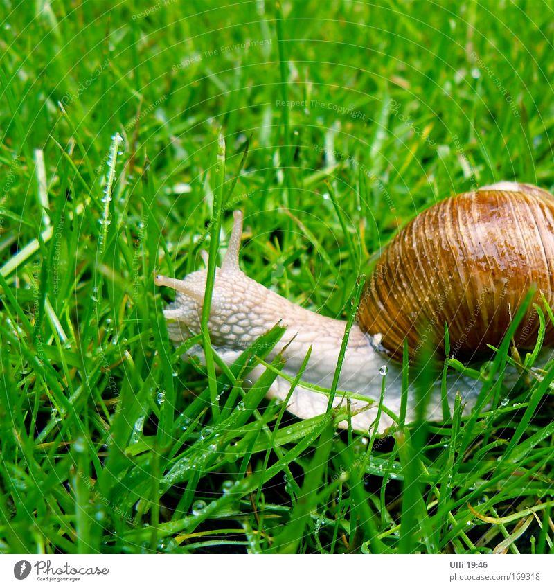 Name: Jutta. Occupation: Snail. Cosmetic name: Juttaschnecke. Nature Earth Grass Meadow Garden Vineyard snail 1 Animal Movement Long Muscular Curiosity Cute