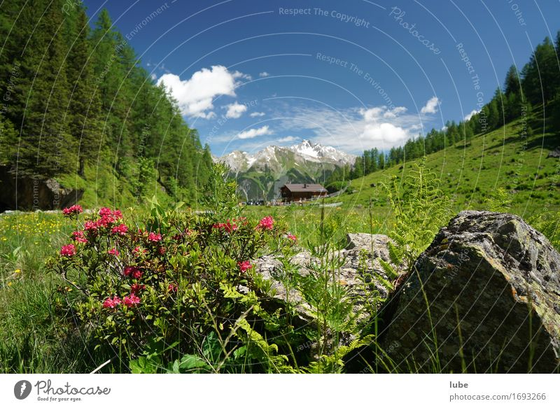 Nature Vacation & Travel Plant Summer Sun Landscape Relaxation Calm Mountain Environment Natural Freedom Rock Tourism Contentment Hiking