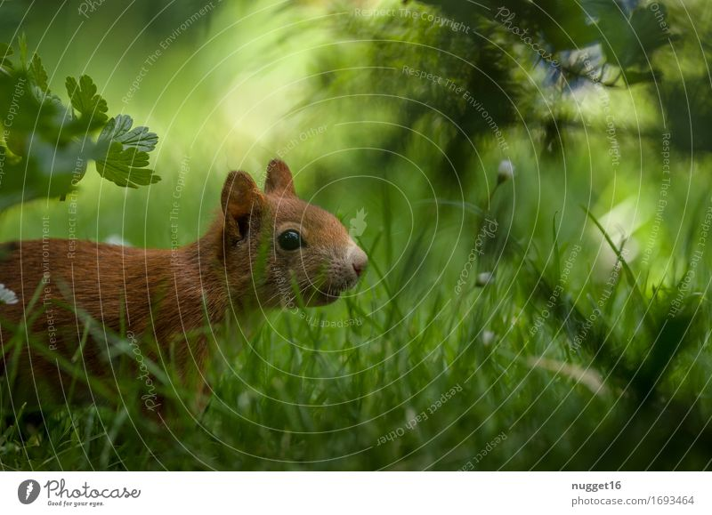 Nature Green Animal Forest Meadow Natural Movement Grass Garden Orange Park Wild animal Esthetic Speed Observe Cute