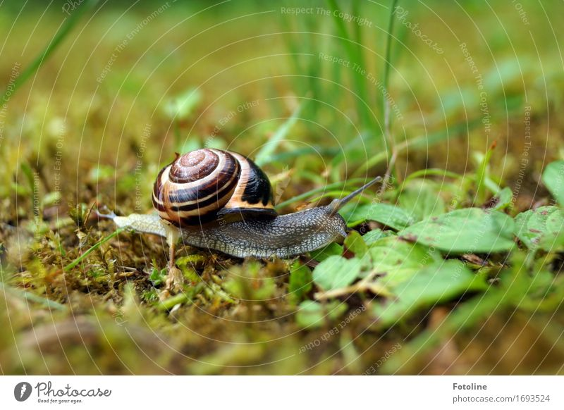 snail Environment Nature Plant Animal Summer Grass Garden Park Meadow Snail 1 Free Small Brown Green Crawl Slimy Smoothness Snail shell Moss Colour photo