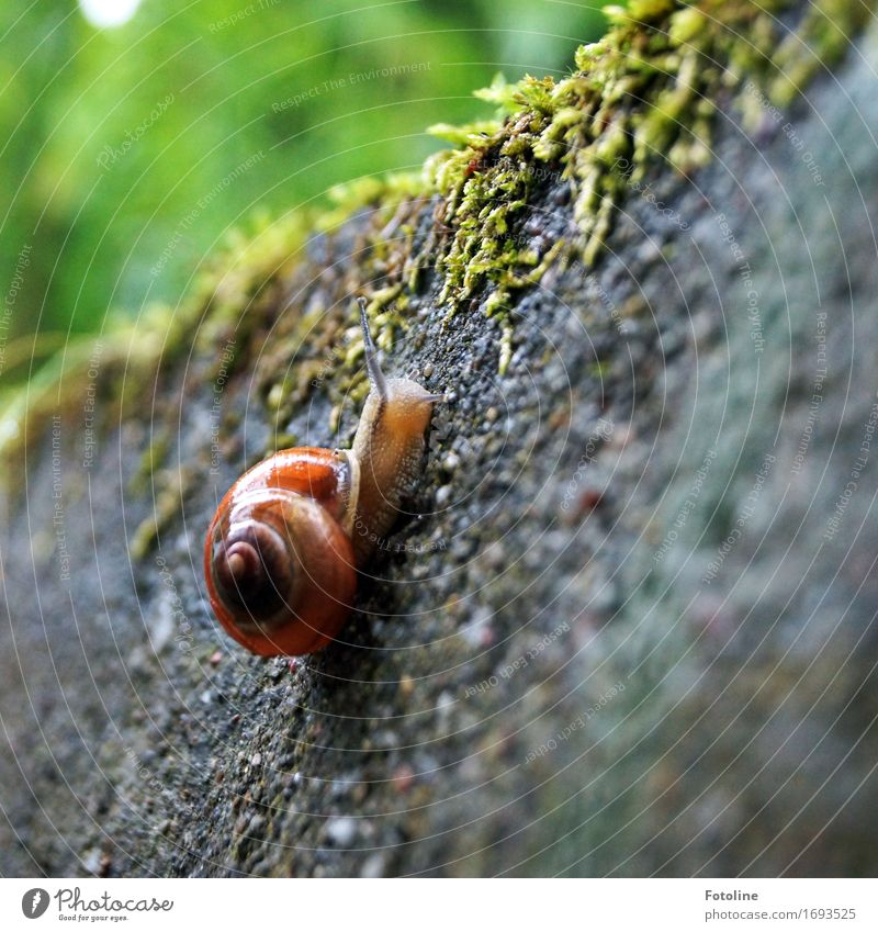 Equipped to go Environment Nature Plant Animal Elements Water Summer Moss Garden Snail 1 Small Near Wet Natural Brown Green Crawl Slimy Smoothness Snail shell