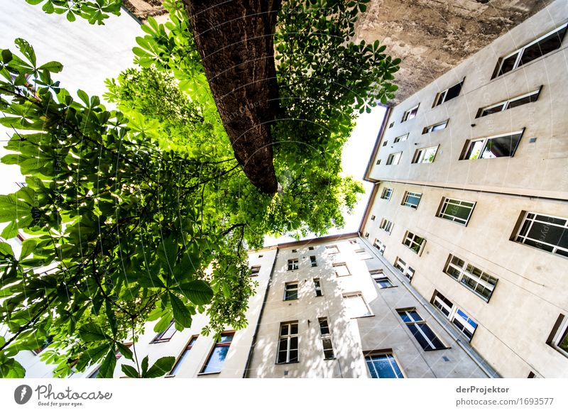 Tree and wall grow towards the sky Vacation & Travel Tourism Trip Freedom Sightseeing City trip Expedition Hiking Capital city House (Residential Structure)