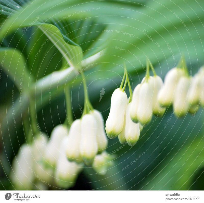 Nature Beautiful White Flower Green Plant Calm Relaxation Blossom Spring Park Contentment Moody Elegant Perspective Esthetic
