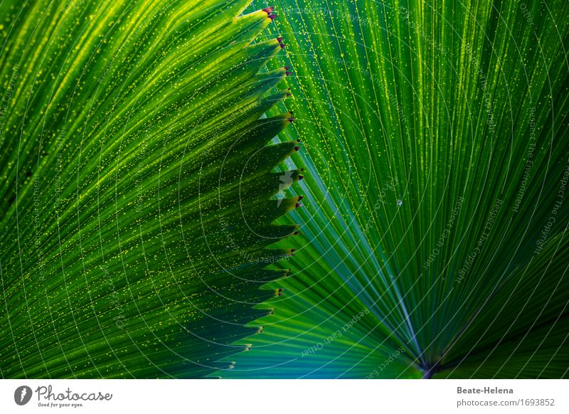 Nature Vacation & Travel Plant Green Tree Relaxation Calm Emotions Exceptional Leisure and hobbies Contentment Esthetic Cool (slang) Protection Serene
