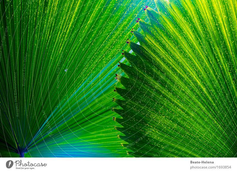 Le Sacre du Printemps. Elegant Nature Plant Foliage plant Exotic Park Umbrellas & Shades Esthetic Exceptional Positive Green Safety Protection Shadow Sunshade