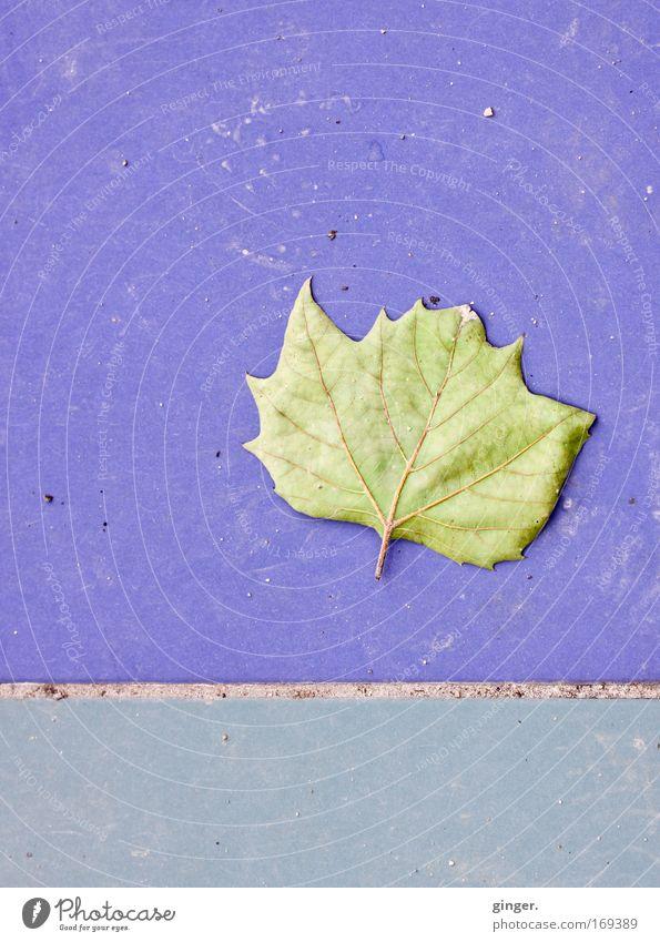 Blue Green Leaf Natural Esthetic Transience Violet Tile Shriveled Seam Rachis Paving tiles Prongs Asymmetry