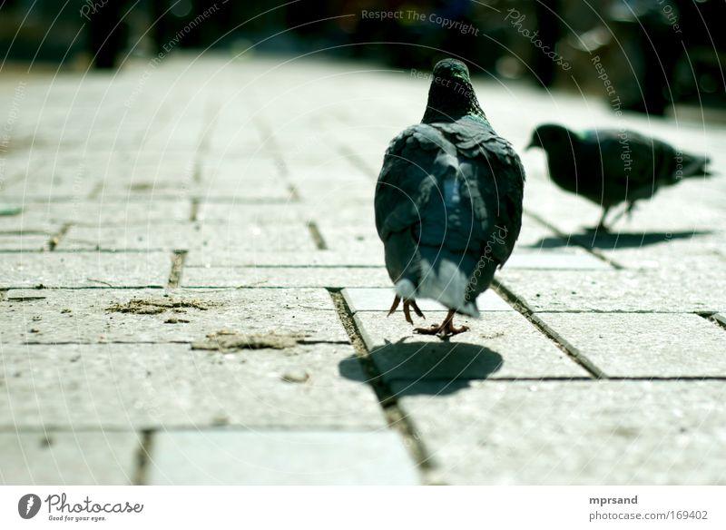 Leisurely walk Horizon Town Animal Pet Wild animal Bird Pigeon 2 Stone Brick Movement Discover Walking Curiosity Brown Gray Green Happiness Advancement Freedom