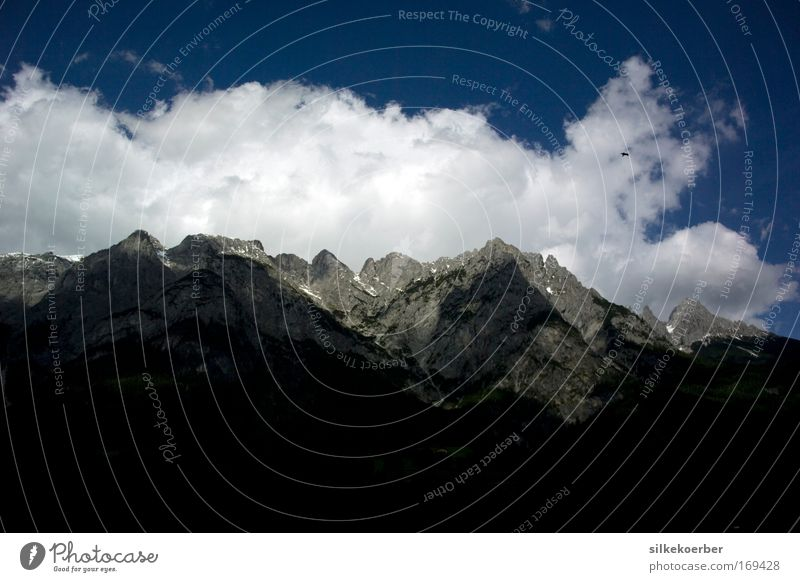 weather to fly Nature Landscape Sky Clouds Beautiful weather Alps Mountain Bird Falcon Flying Power Calm Freedom Austria Federal State of Salzburg Colour photo
