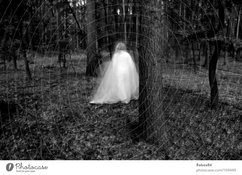 Holla the forest fairy Black & white photo Exterior shot Twilight Long exposure Motion blur Feminine 1 Human being Nature Tree Forest Discover Esthetic
