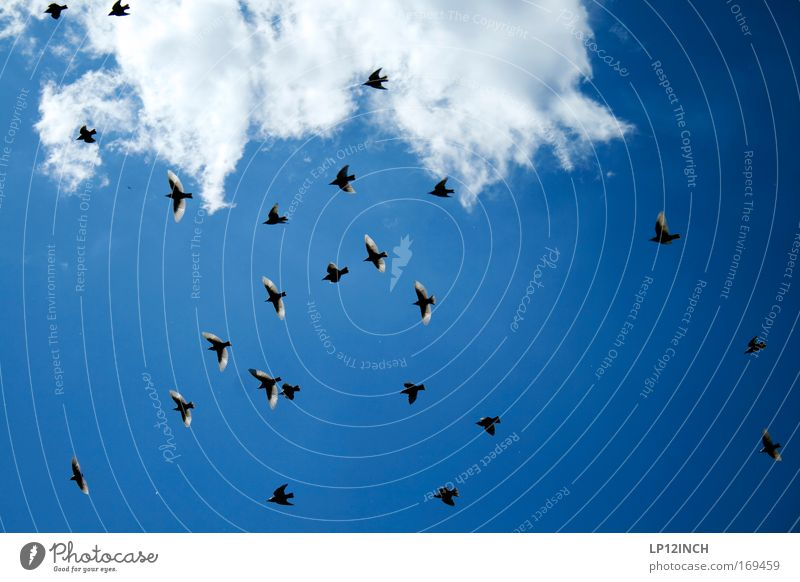 Sky Nature Blue Summer Black Environment Landscape Air Bird Esthetic Observe Discover Accuracy Flock Swallow