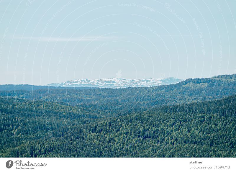 Nature Vacation & Travel Landscape Relaxation Forest Mountain Travel photography Tourism Discover Norway Oslo