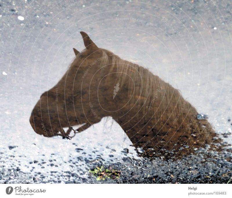 mirage Colour photo Subdued colour Exterior shot Detail Deserted Copy Space top Day Silhouette Reflection Ride Environment Nature Water Rain Animal Pet Horse