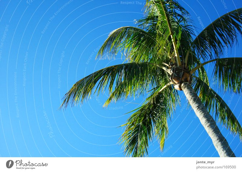 Lazy Day Vacation & Travel Tourism Nature Landscape Plant Summer Beautiful weather Tree Foliage plant Exotic Palm tree Coconut Virgin forest Ocean