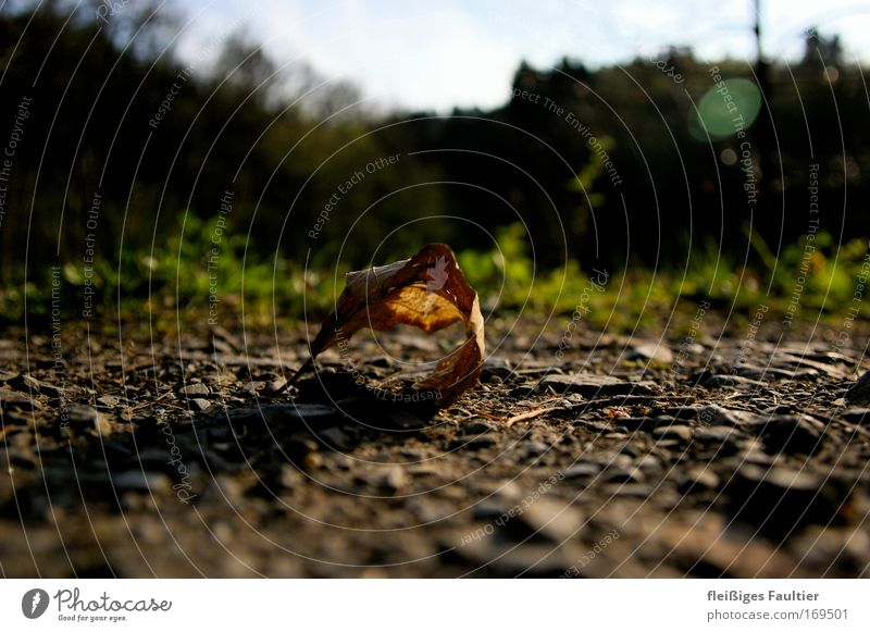 Nature Plant Leaf Autumn Moody Brown Environment Time Earth Esthetic Pure Transience Infinity Natural Decline Peaceful