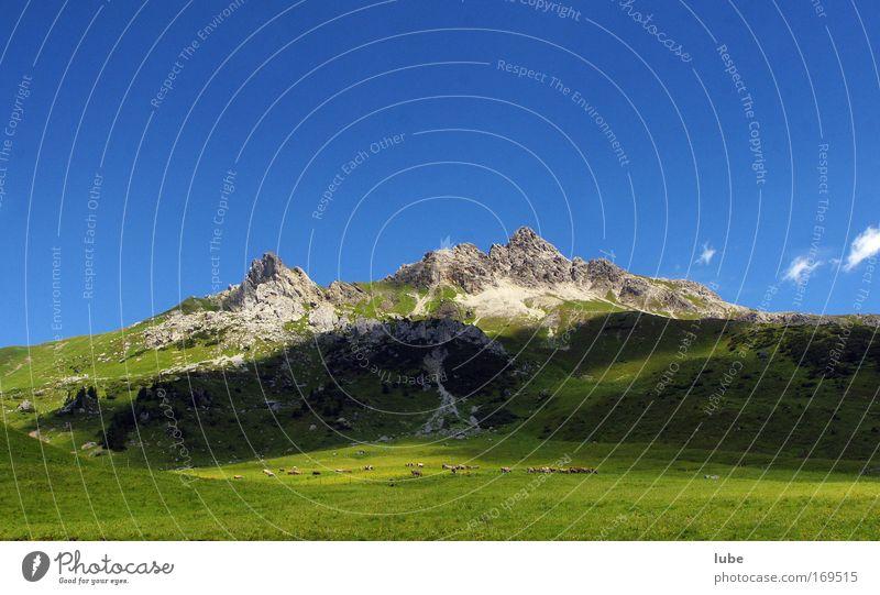 Nature Green Summer Vacation & Travel Meadow Grass Mountain Stone Landscape Environment Horizon Rock Trip Tourism Alps Peak
