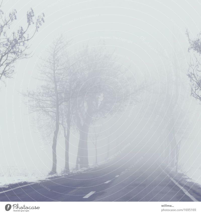 fleeing the fog Fog Street Country road chill Winter Bleak Avenue Snow Exterior shot Deserted