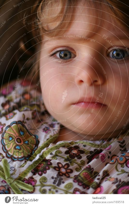 little dreamer Colour photo Exterior shot Day Sunlight Portrait photograph Upper body Front view Looking Forward Human being Child Toddler Girl Infancy Head