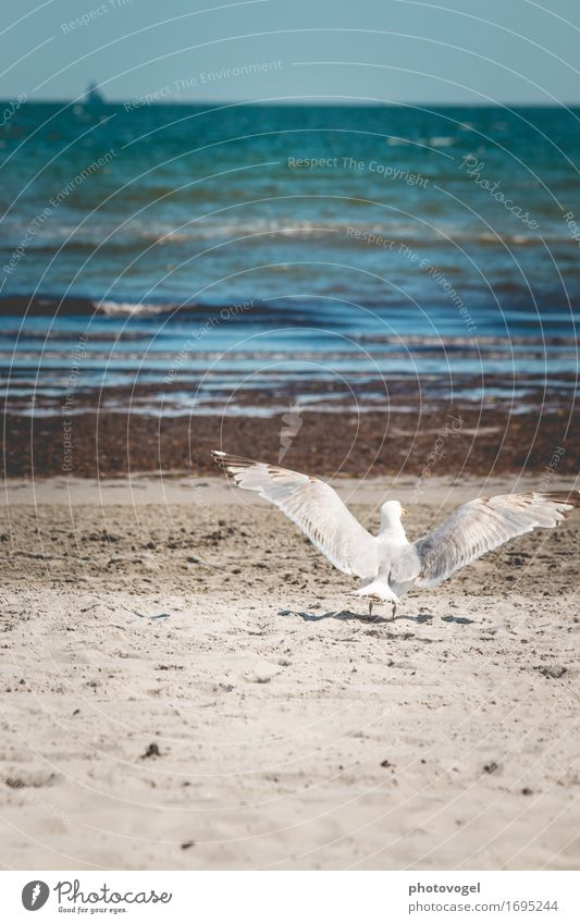 departure Relaxation Freedom Summer Summer vacation Beach Ocean Waves Nature Landscape Sand Water Sky Cloudless sky Coast Baltic Sea Animal Seagull 1 Flying