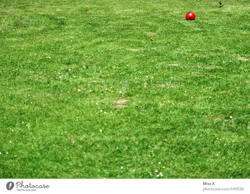Nature Green Garden Grass Empty Ball Lawn Football pitch