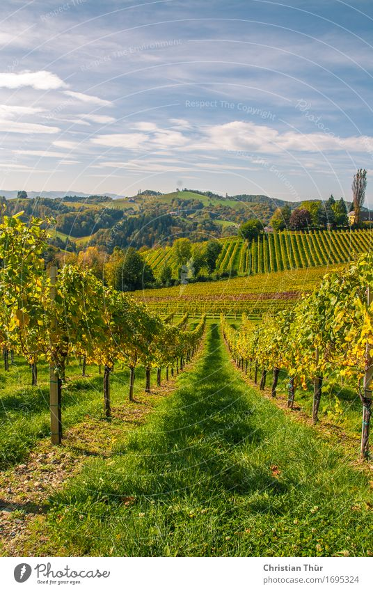 vineyards Harmonious Well-being Contentment Relaxation Calm Trip Adventure Far-off places Freedom Sightseeing Summer Summer vacation Mountain Hiking Environment