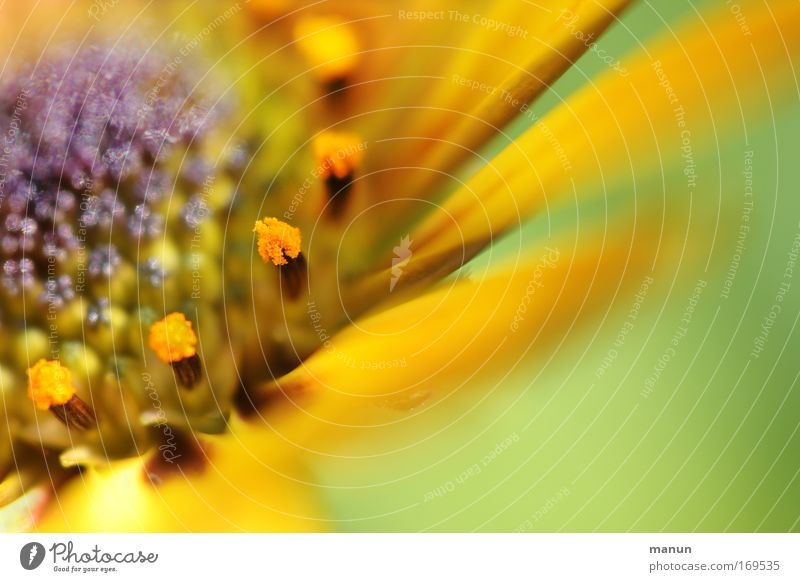 soft flower Colour photo Multicoloured Exterior shot Close-up Detail Macro (Extreme close-up) Experimental Abstract Pattern Structures and shapes