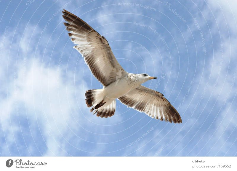 gliding flight Colour photo Exterior shot Aerial photograph Day Animal Wild animal Bird seagull Florida Sailing 1 Flying Glide