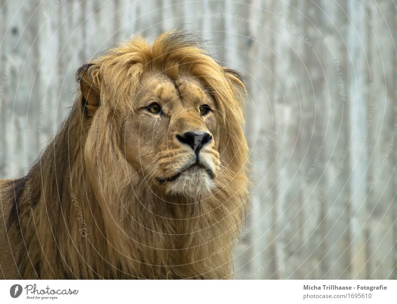 Nature Animal Power Wild animal Esthetic Speed Large Observe Protection Near Strong Pelt Exotic Catch Hunting Animal face