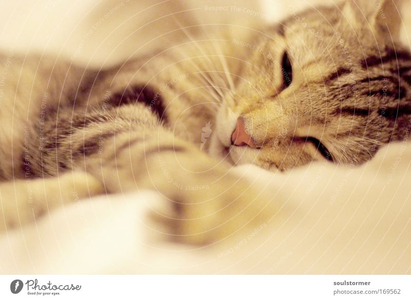 Beautiful Black Animal Relaxation Emotions Happy Dream Cat Contentment Brown Glittering Elegant Sleep Happiness Soft Protection