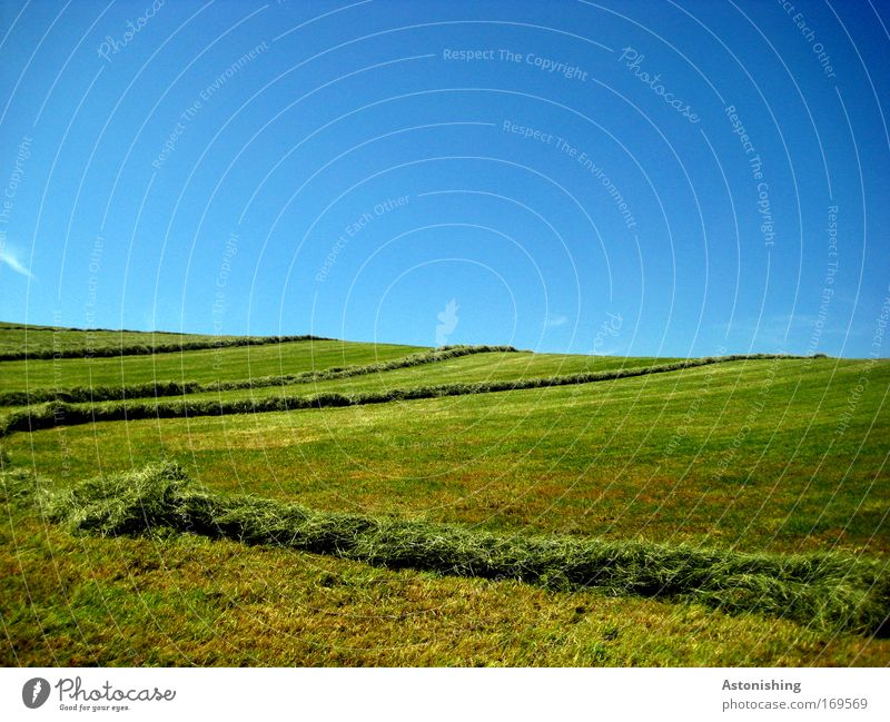 striped bottom Environment Nature Landscape Earth Sky Cloudless sky Summer Weather Beautiful weather Plant Grass Meadow Hill Warmth Blue Green Line Reap Stripe