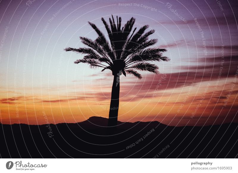 shadow Lifestyle Nature Sky Clouds Sunrise Sunset Summer Palm tree Palma de Majorca Authentic Exceptional Infinity Beautiful Warmth Adventure Esthetic
