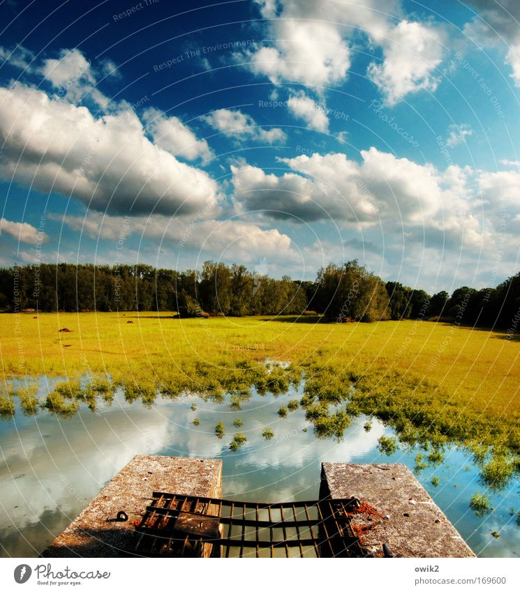 Sky Nature Old Plant Blue Green Water Tree Landscape Clouds Environment Yellow Spring Grass Wall (barrier) Metal